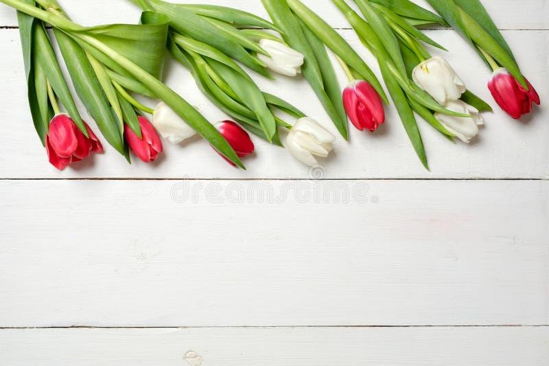 Vårbakgrund, tulpan överst på det vita träskrivbordet, mall för hälsningkort för kvinnor eller moderdag, banermodell med kopia s royaltyfri bild