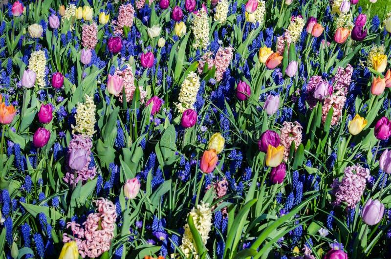 Vårbakgrundstextur från en variation av färger royaltyfria bilder
