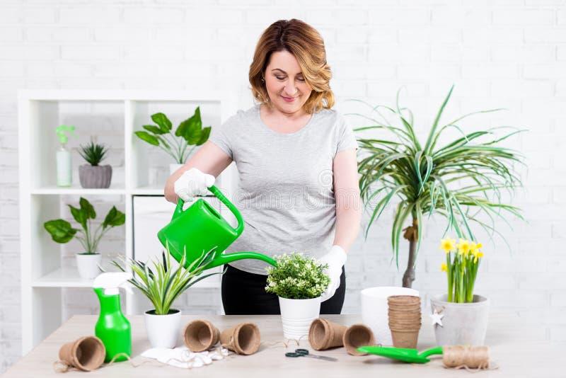 Vårbegrepp - mogen kvinna som hemma bevattnar inlagda växter arkivfoto