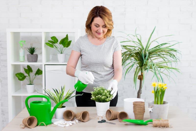 Vårbegrepp - mogen kvinnlig trädgårdsmästare som hemma planterar blommor i krukor royaltyfri bild