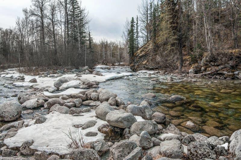 Vårblidväder i Alaska royaltyfri bild
