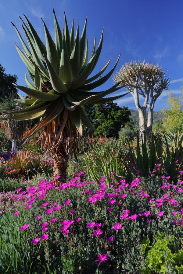 Vårblom i Kalifornien på Taft botaniska trädgårdar, Ojai C arkivfoton