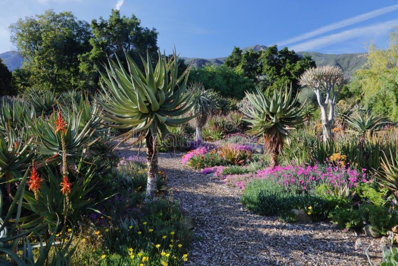 Vårblom i Kalifornien på Taft botaniska trädgårdar, Ojai C royaltyfri bild