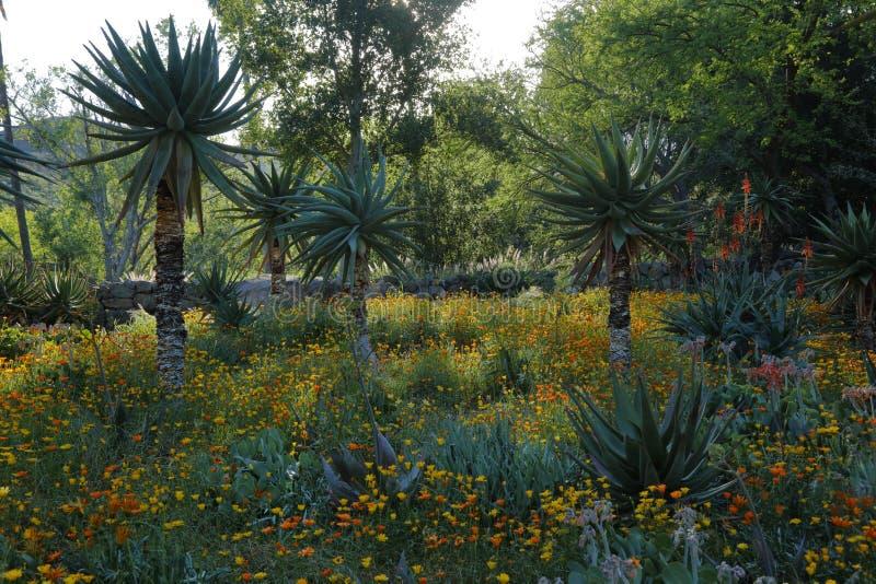 Vårblom i Kalifornien på Taft botaniska trädgårdar, Ojai C royaltyfria foton