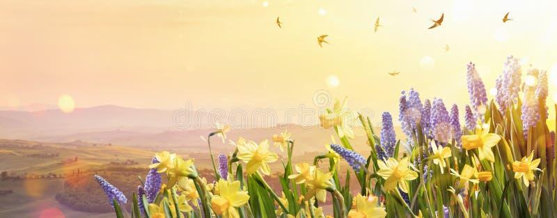 Vårblommor i solljuset arkivfoton
