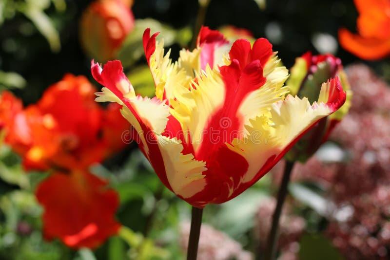Vårblommor i trädgården ljusnar dagen arkivfoto