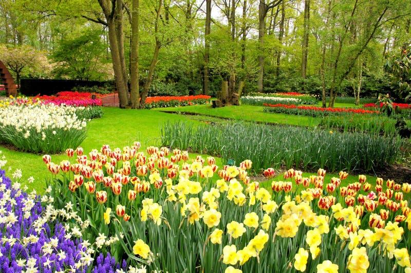 Vårblommor, Keukenhof trädgårdar arkivbilder