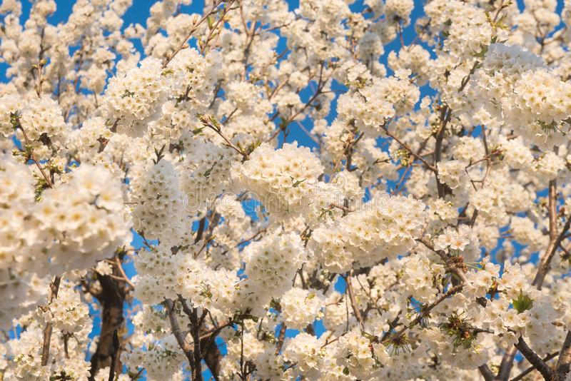 Vårblommor, naturlig bakgrund royaltyfria bilder