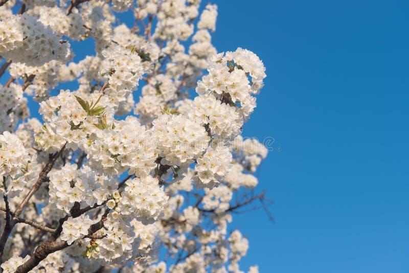 Vårblommor, naturlig bakgrund arkivfoton