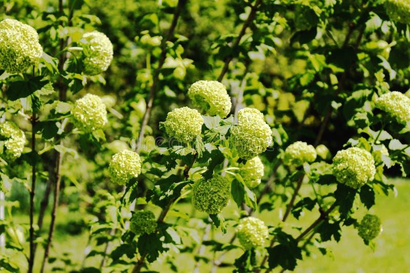 Vårblommor och gräsplansidor royaltyfria bilder