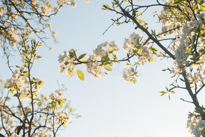 Vårblommor på den blåa himlen arkivbild