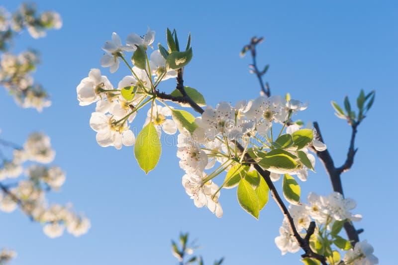 Vårblommor på naturlig blå himmel fotografering för bildbyråer