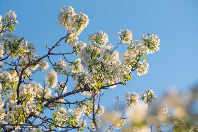 Vårblommor på naturlig blå himmel arkivfoto