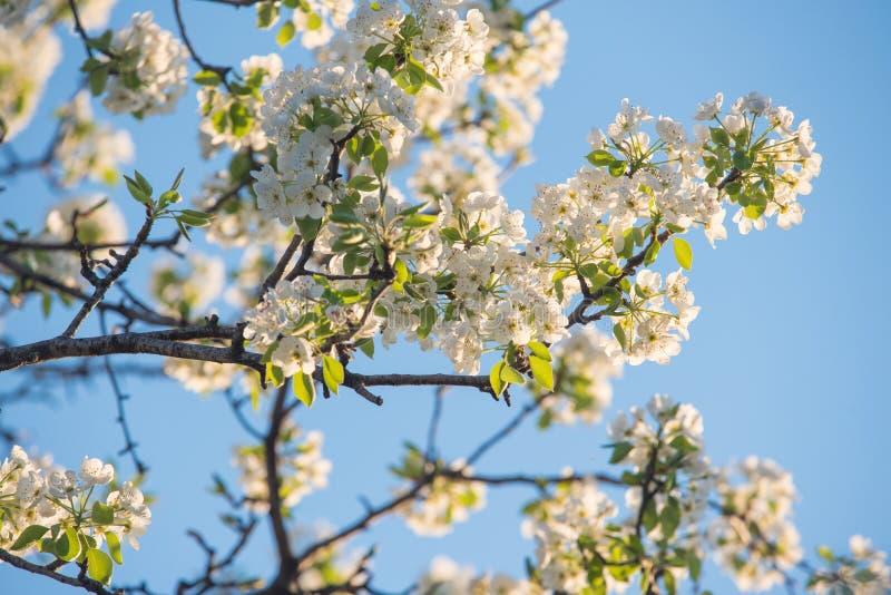 Vårblommor på naturlig blå himmel arkivbild