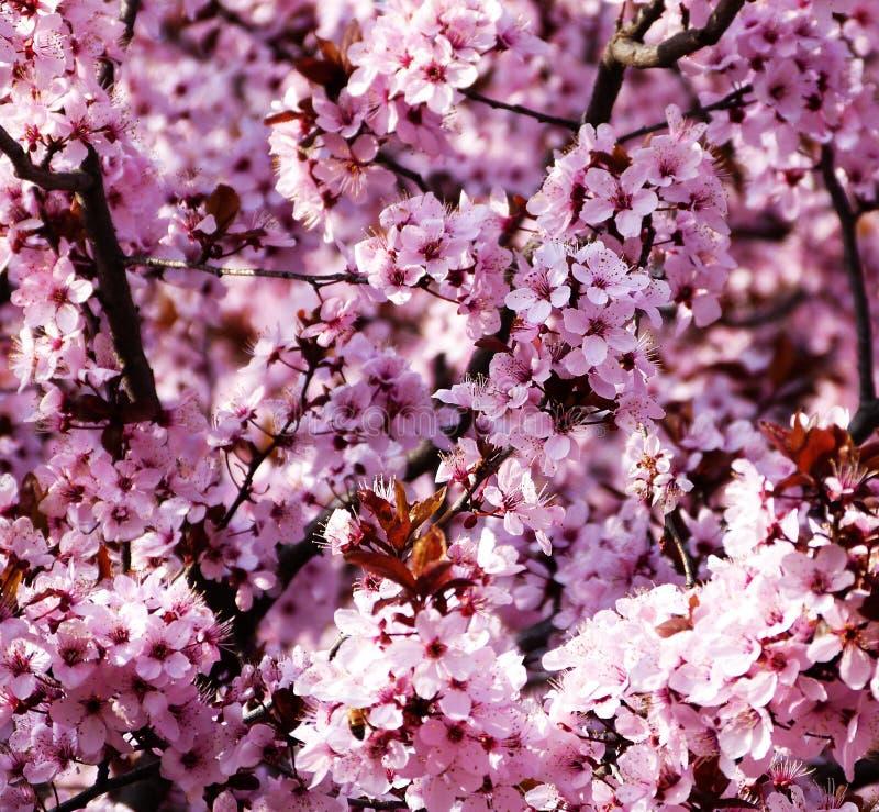 Vårblommor på träden royaltyfri bild