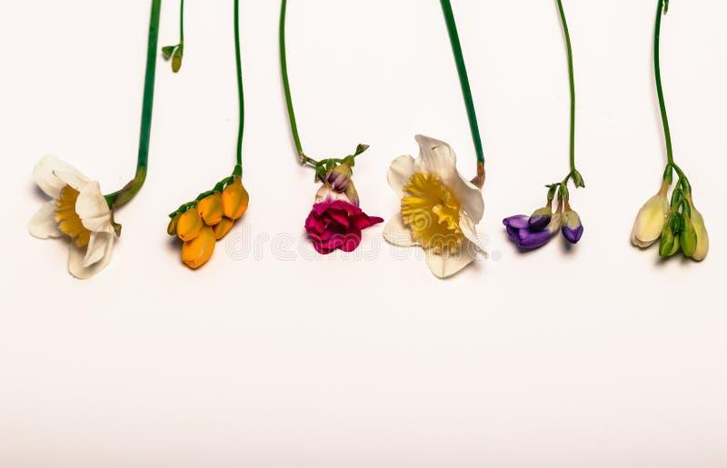 Vårblommor, pingstlilja, freesia royaltyfri fotografi
