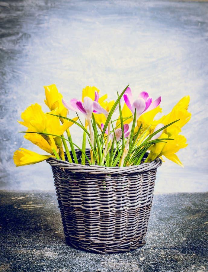 Vårblommor samlar ihop med påskliljor och krokusar i korg royaltyfria foton