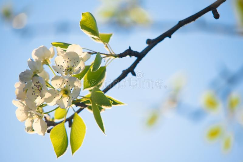 Vårblommor, selektiv fokus royaltyfri fotografi