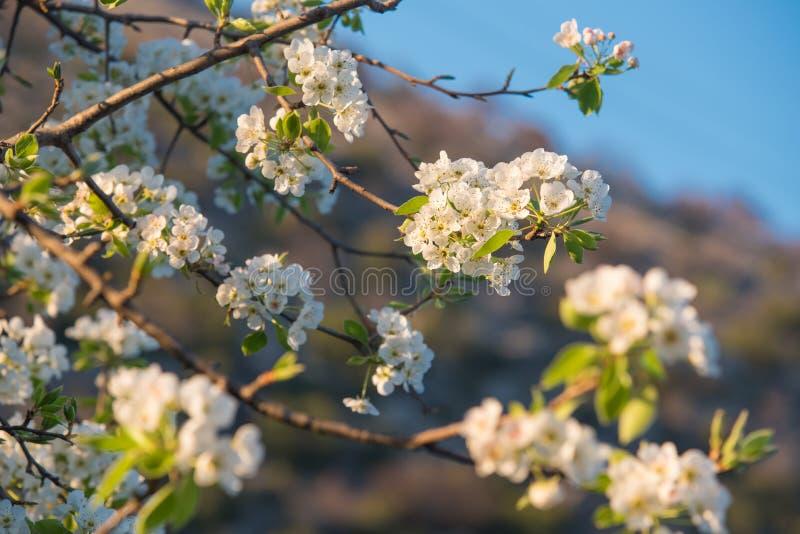 Vårblommor, selektiv fokus arkivbild
