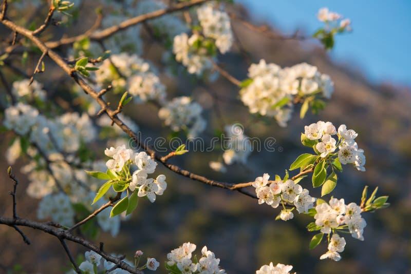 Vårblommor, selektiv fokus royaltyfria foton