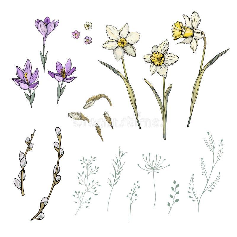 Vårblommor ställde in med pingstliljan och krokus vektor illustrationer