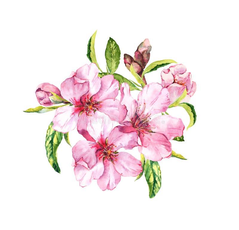 Vårblomning - bukett av rosa sakura, körsbärsröda blommor Blom- akvarell för vår royaltyfri illustrationer