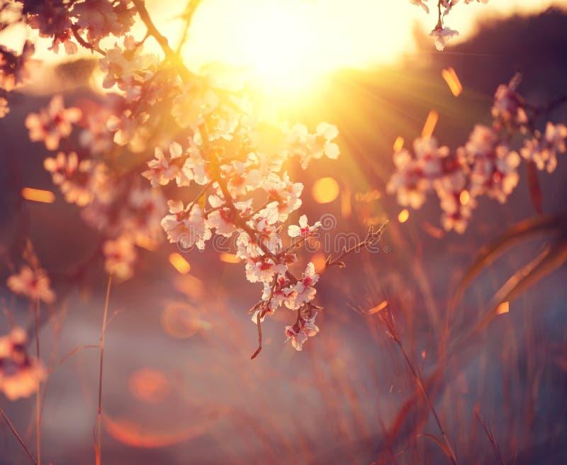 Vårblomningbakgrund Den härliga naturplatsen med det blommande trädet och solen blossar fotografering för bildbyråer