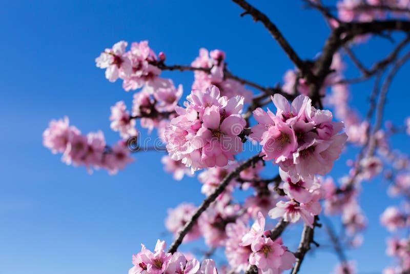 Vårblomningbakgrund Härlig naturplats med att blomma trädet på solig dag just rained Härlig fruktträdgård i vår arkivbild