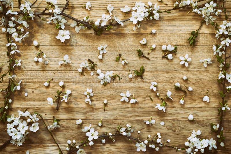 Vårblomningfilial på träbakgrund royaltyfria foton