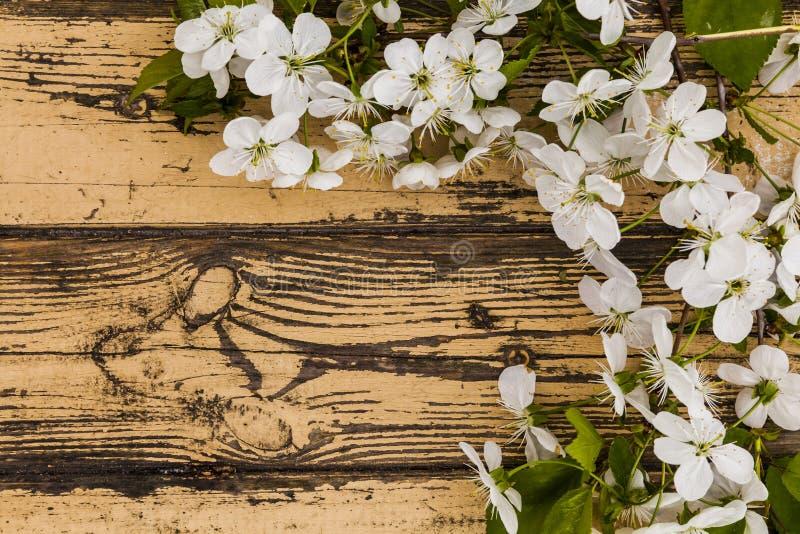 Vårblomningfilial på träbakgrund royaltyfri foto