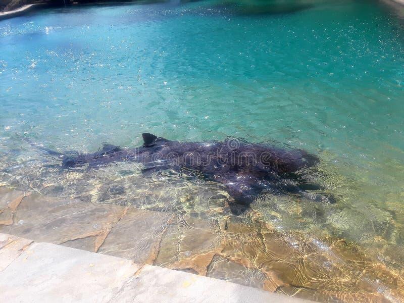 vårda hajen royaltyfri fotografi