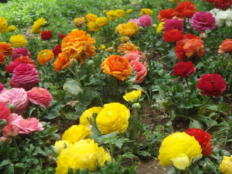 våren är full av gräs och färgrik royaltyfria bilder