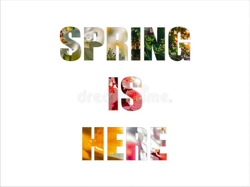 Våren är här ord med rosa och vita blommor i den isolerade bakgrunden royaltyfria bilder