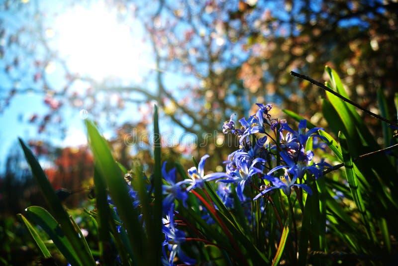 Våren är kommande i Nya Zeeland royaltyfri fotografi