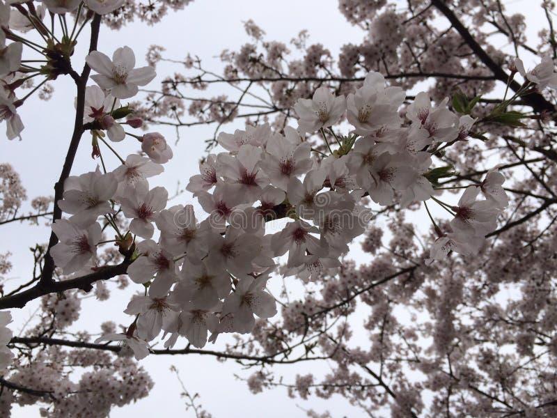 Våren är starten royaltyfria bilder