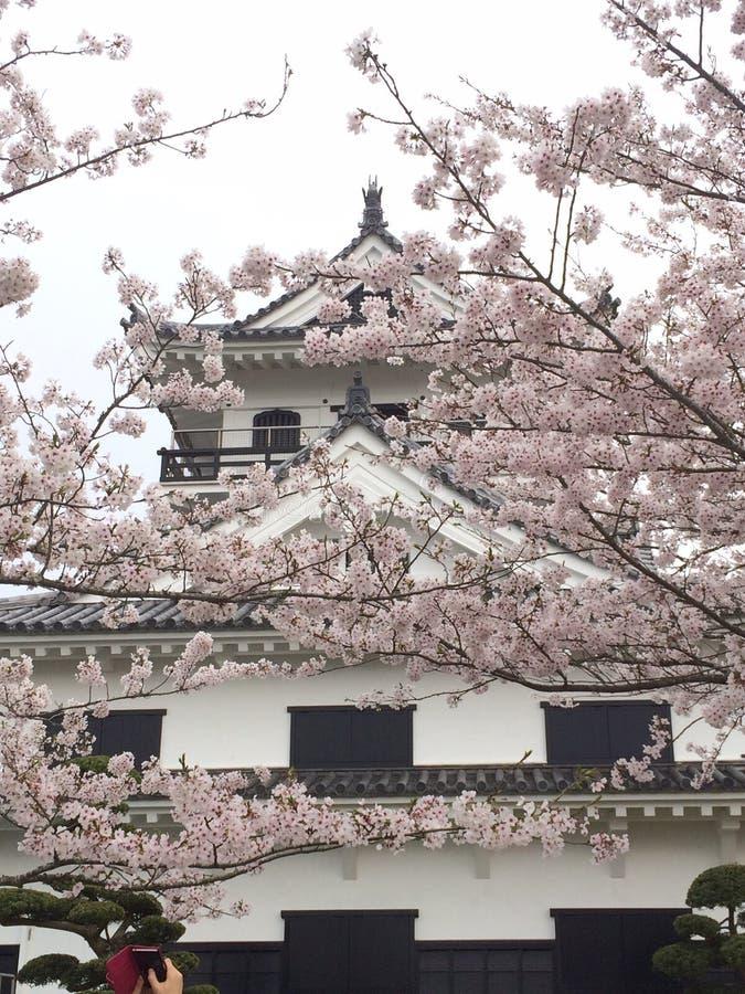 Våren är starten arkivbilder