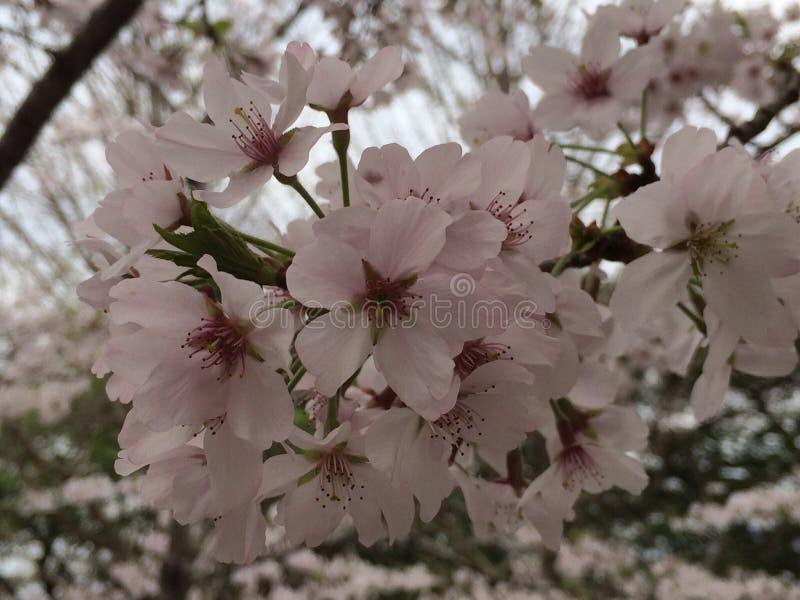 Våren är starten arkivfoton