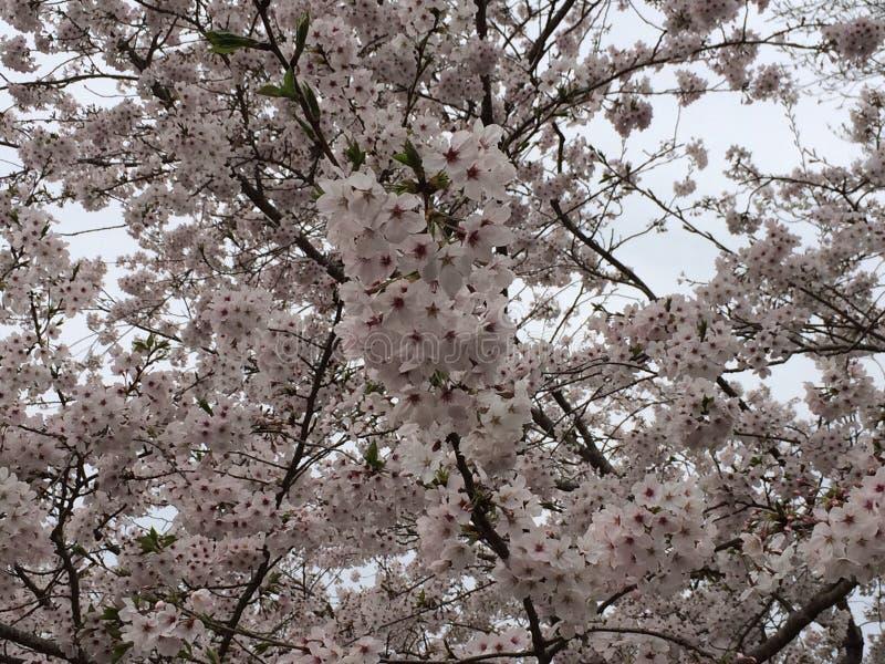Våren är starten arkivbild