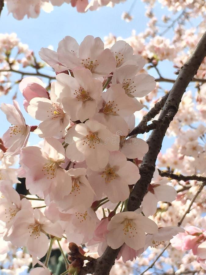Våren är starten royaltyfri bild