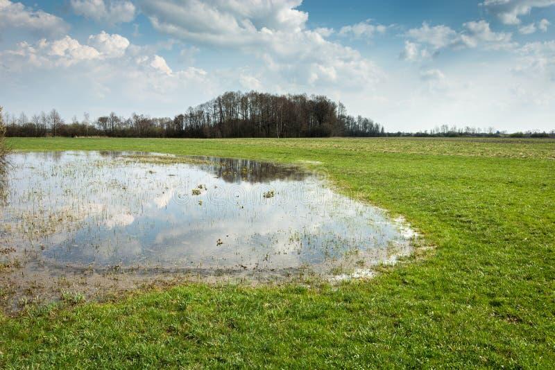 Våren översvämmade ängen, skogen på horisonten och moln i himlen royaltyfria bilder