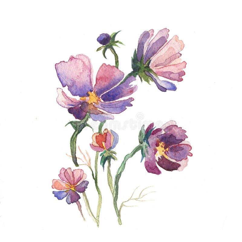 Våren blommar astermålningvattenfärgen stock illustrationer
