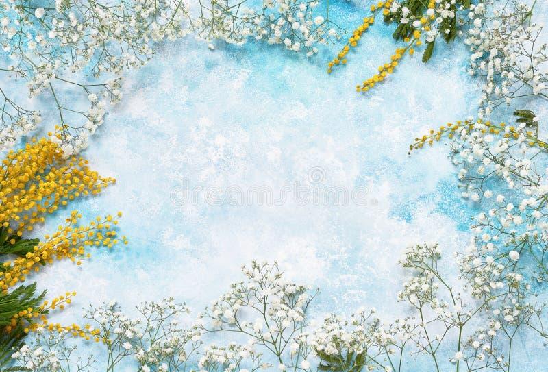 Våren blommar bakgrund med mimosan och gypsophilaen Kopieringsutrymme, bästa sikt royaltyfri fotografi