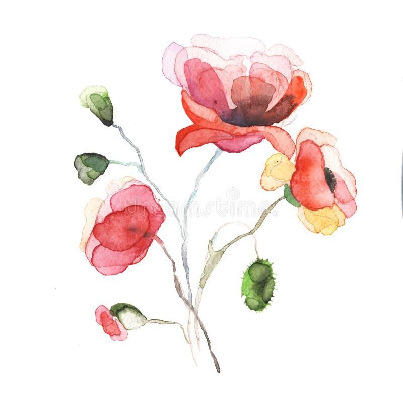 Våren blommar den isolerade vallmomålningvattenfärgen vektor illustrationer