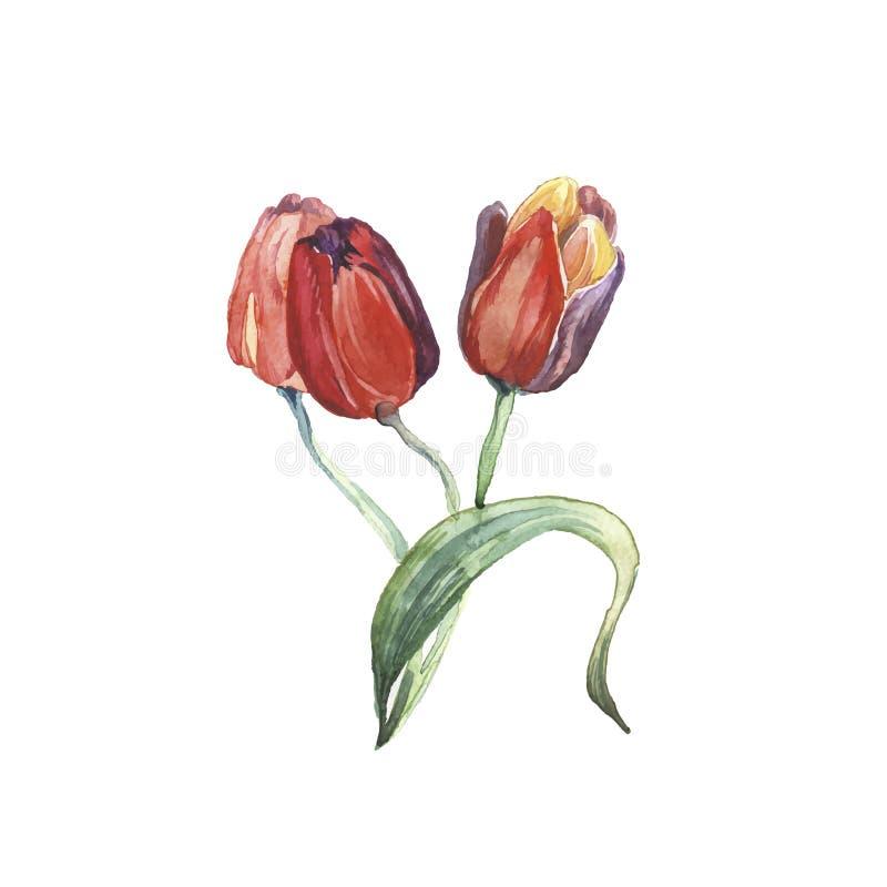Våren blommar den isolerade vattenfärgen stock illustrationer