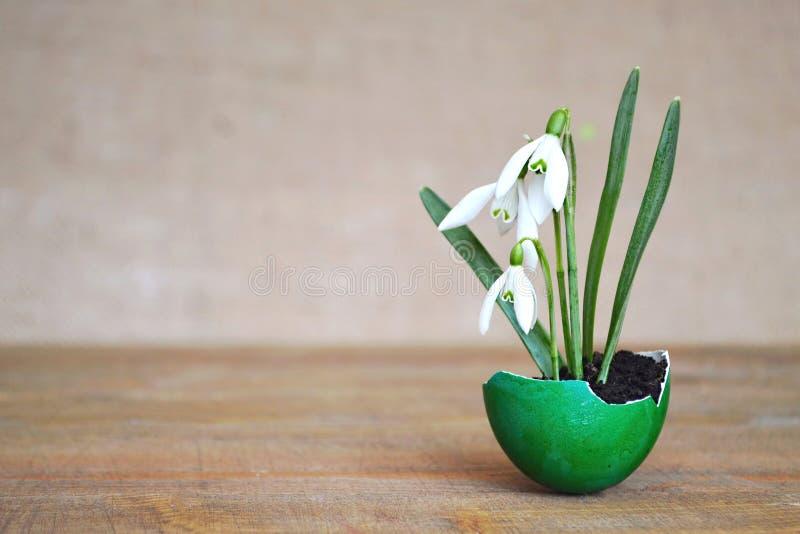 Våren blommar i äggskal royaltyfri fotografi