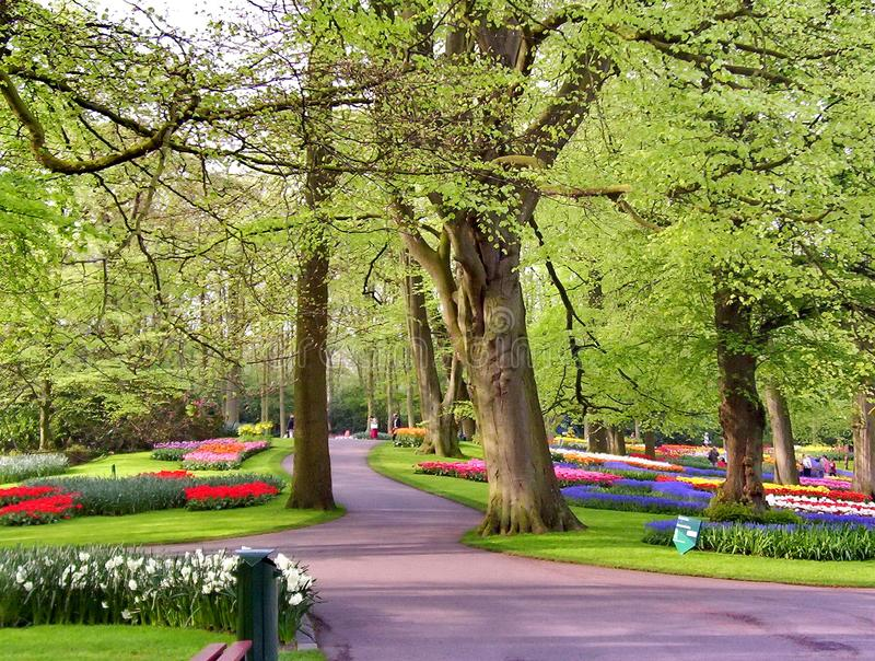 Våren blommar i en parkera arkivbilder