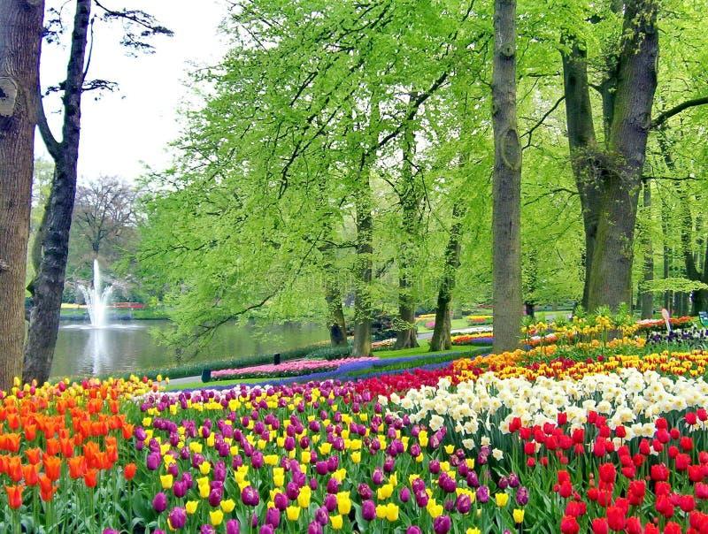 Våren blommar i en parkera royaltyfria foton