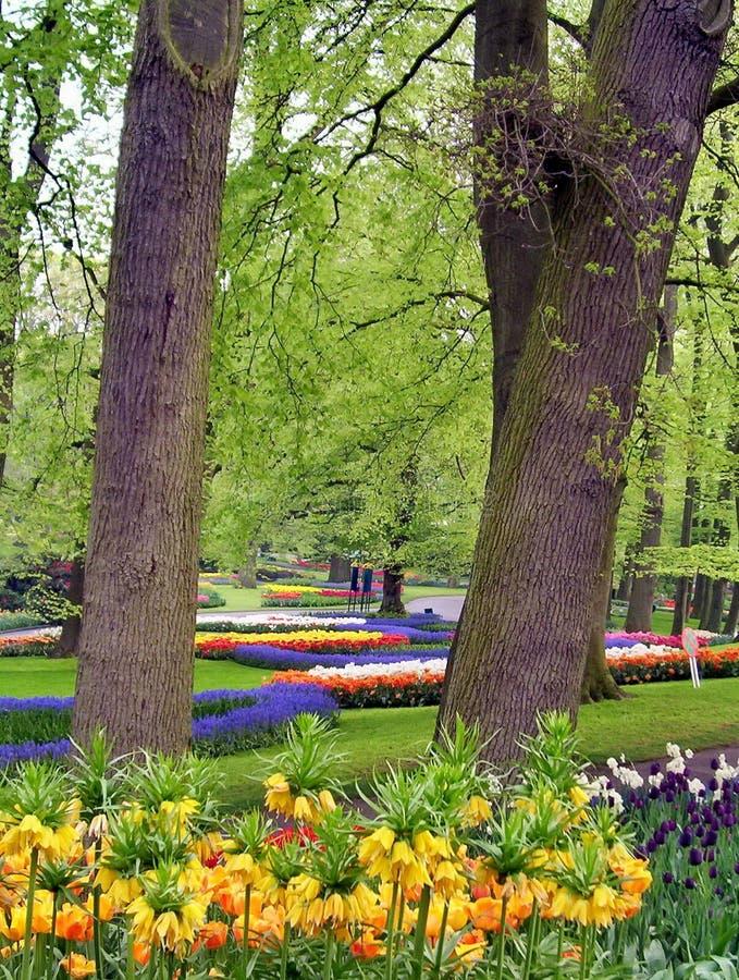 Våren blommar i en parkera arkivfoto