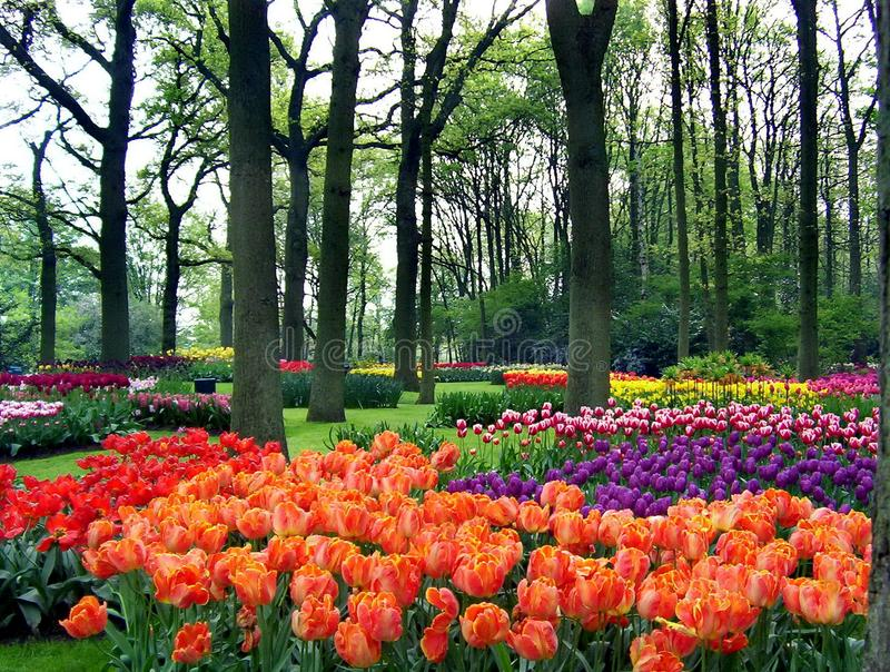 Våren blommar i en parkera royaltyfri fotografi