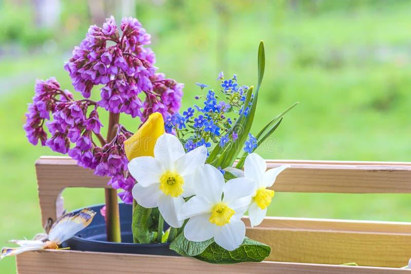 Våren blommar i träask arkivfoton